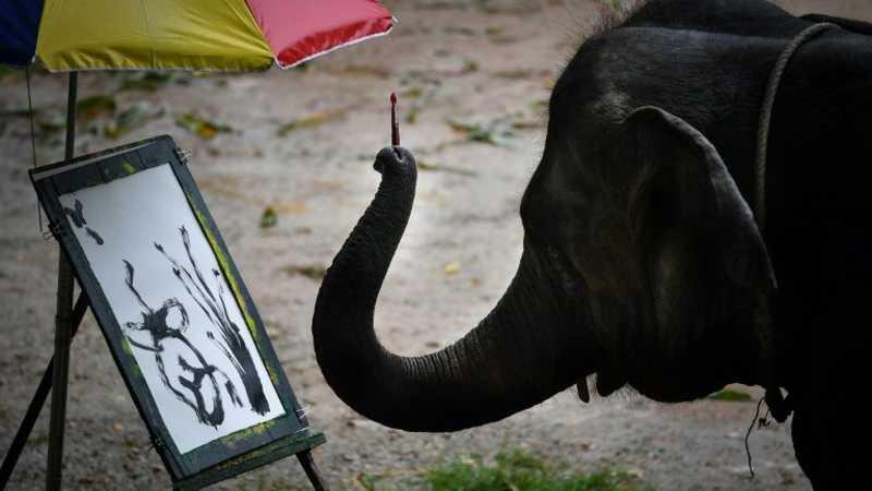 Elefante pinta para os turistas em um parque de Maetaeng - AFP  Homem dá banho em um elefante antes da chegada dos turistas - AFP