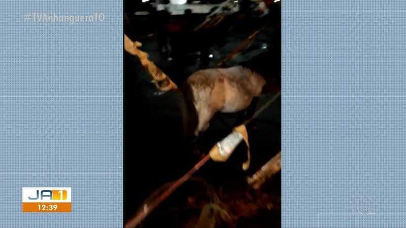Animais ficaram amarrados no pátio durante a chuva — Foto: Reprodução/TV Anhanguera