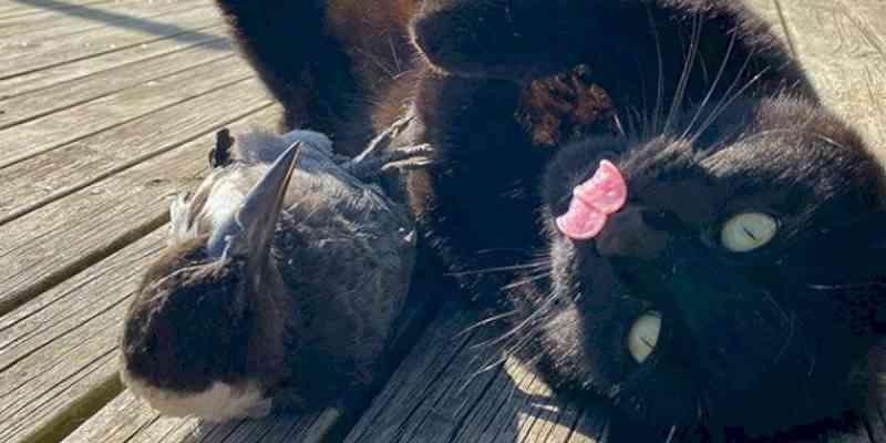 Amizade entre gato adotado e pássaro resgatado faz sucesso nas redes sociais