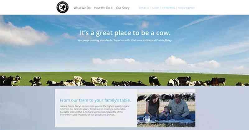 Maior fazenda de laticínios orgânicos exposta por torturar vacas mães