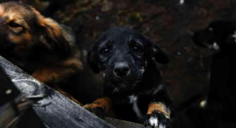 Pensando em comprar um cachorro neste Natal? O horror por trás do comércio de animais 'de companhia'