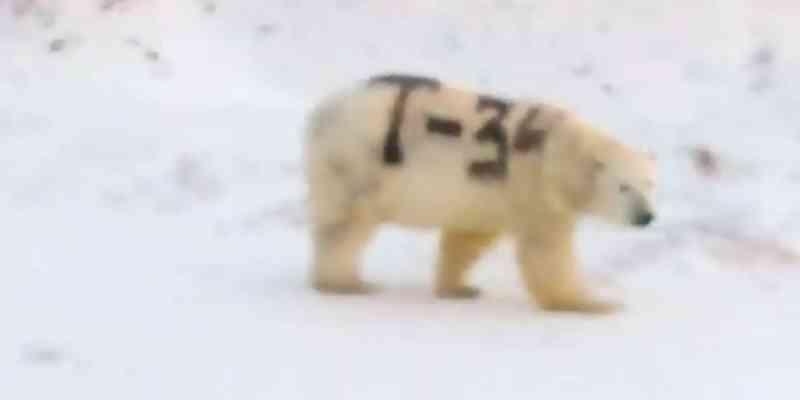 Russos pintam urso polar com spray e animal agora corre risco de vida
