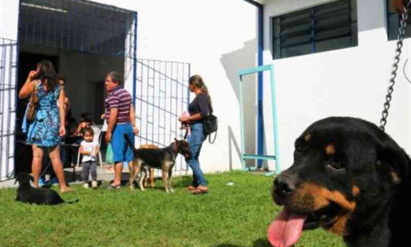 Senado aprova projeto que proíbe sacrifício de cães, gatos e aves por órgãos de controle de zoonoses