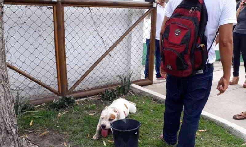 Homem é detido em Maceió após obrigar cachorro a percorrer quase 10 km e arrastá-lo