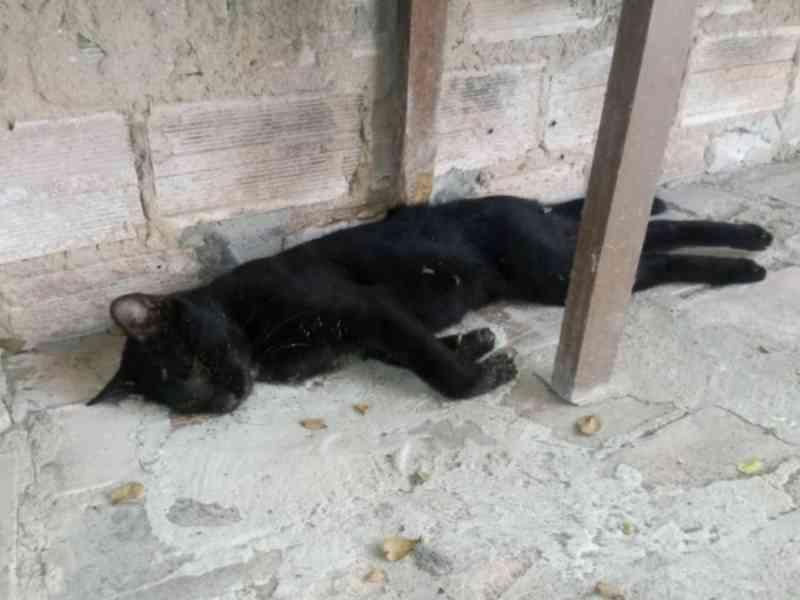 Veterinária denuncia envenenamento de vários animais em rua da Pajuçara, em Maceió