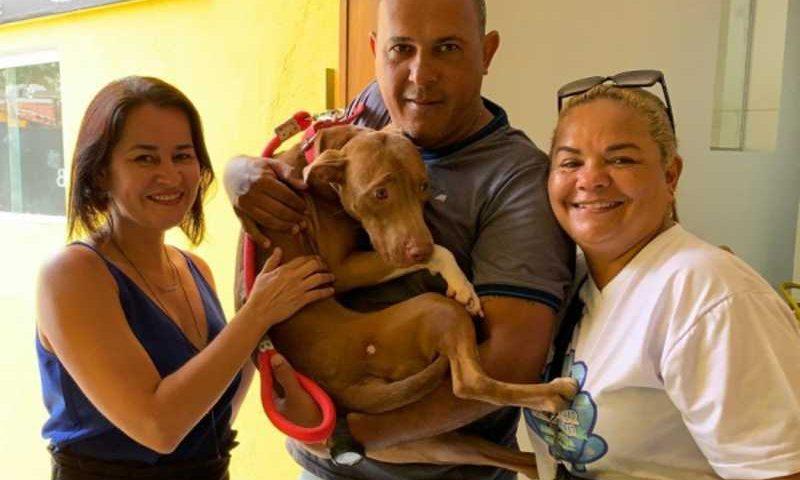 Cadela resgatada em situação de maus-tratos é adotada. FOTO: ARQUIVO PESSOAL