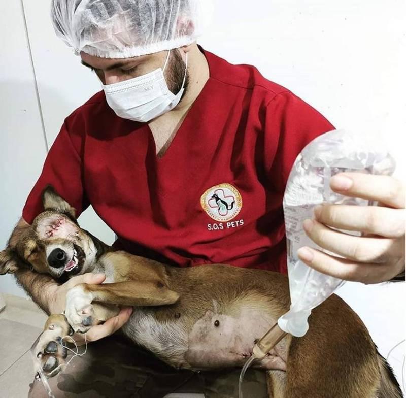 Foto: Reprodução/Facebook S.O.S Pets