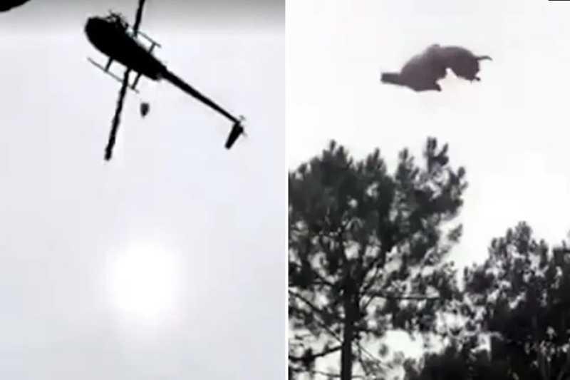 Os internautas disseram que o vídeo foi uma armação do próprio dono da casa. Mas o argentino veio a público negar relação com o incidente