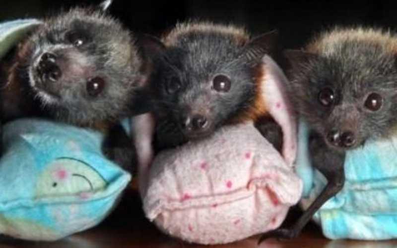 Bastões que simulam asas das mães de morcegos estão entre os objetos mais produzidos. Reprodução