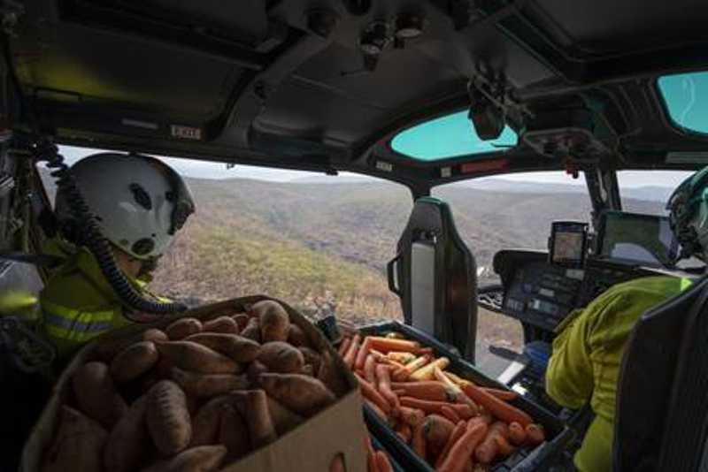 Helicóptero abastecido com vegetais sobrevoa região da Austrália Foto: Divulgação/NSW Parks and Wildlife Service