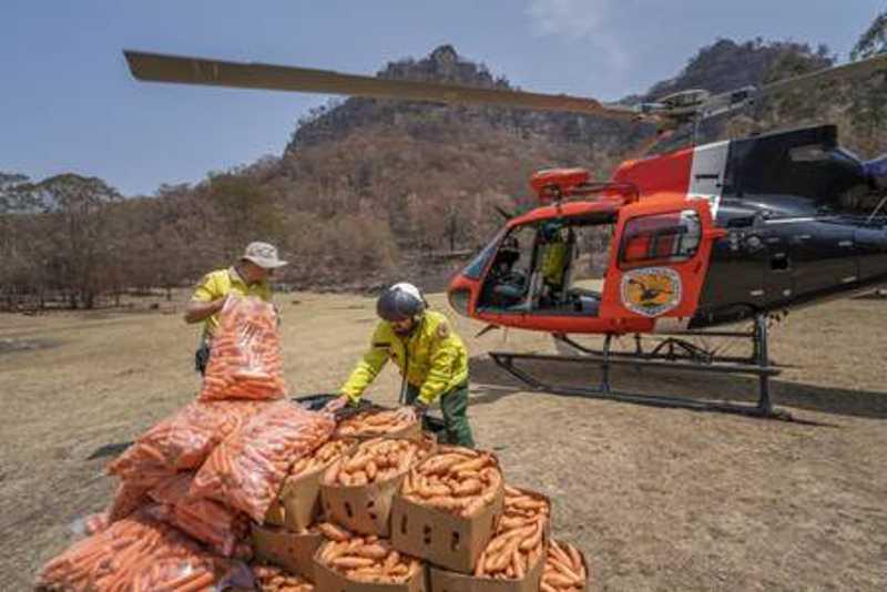 Vegetais são levados a helicóptero assistencial na Austrália Foto: Divulgação/NSW Parks and Wildlife Service