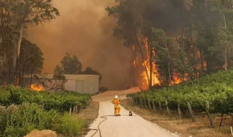 Coala permanece ao lado de bombeiro enquanto observam o fogo destruir seu habitat