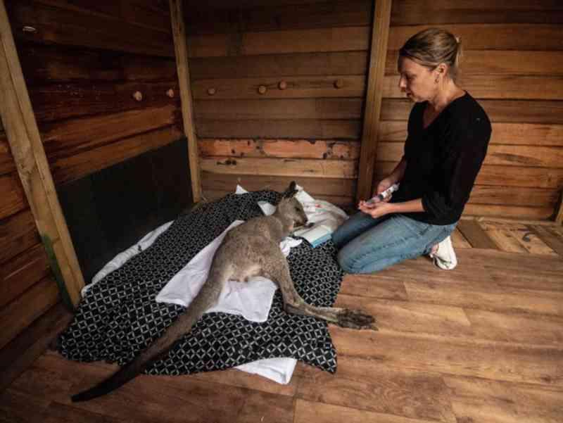 Casal reconstrói 'santuário' e luta para salvar animais selvagens após destruição causada pelos fogos na Austrália