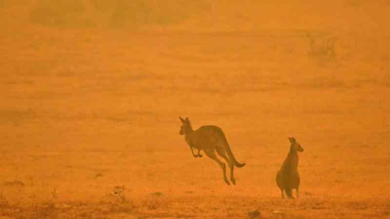Cientistas estimam que 1,25 bilhão de animais morreram nos incêndios florestais na Austrália