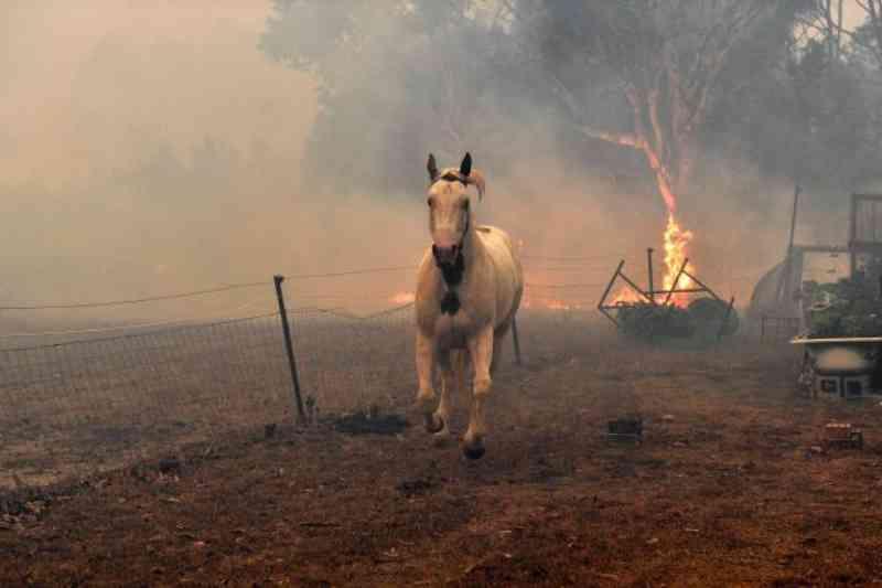 Meio bilhão de animais foram mortos nos incêndios na Austrália