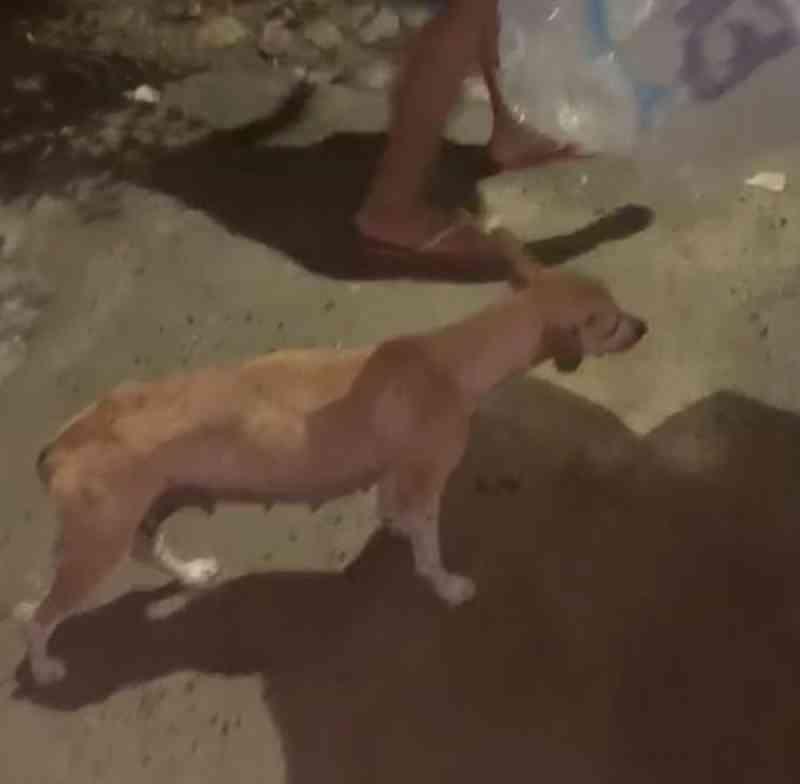 Cadela fica presa no para-choque de carro após ser atropelada e é adotada por motorista no Ceará