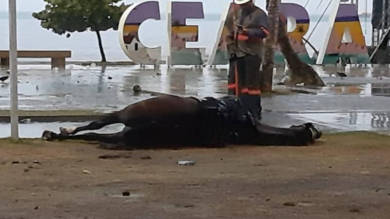 O corpo do animal foi retirado do local por volta das 7h