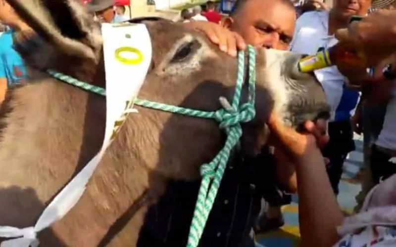 Nas imagens, o desconforto do burro é evidente e até o governador local