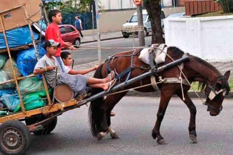 Brasília impõe um fim ao uso de animais em carroças. Agora é se adaptar à nova regra