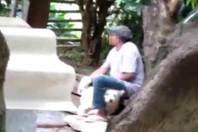 Homem é flagrado por vizinhos estuprando cachorro em Brasília, DF