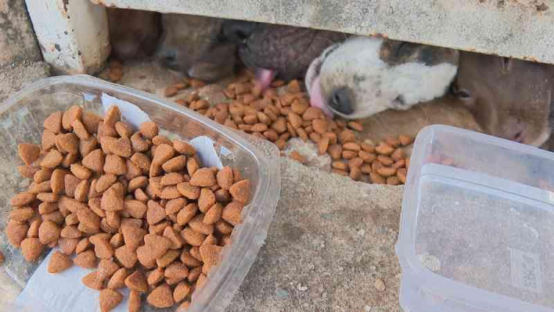 Cachorros são abandonados sem comida em condomínio no DF