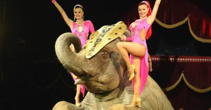 Chega de sofrimento: Madri proíbe circos com animais a partir de abril