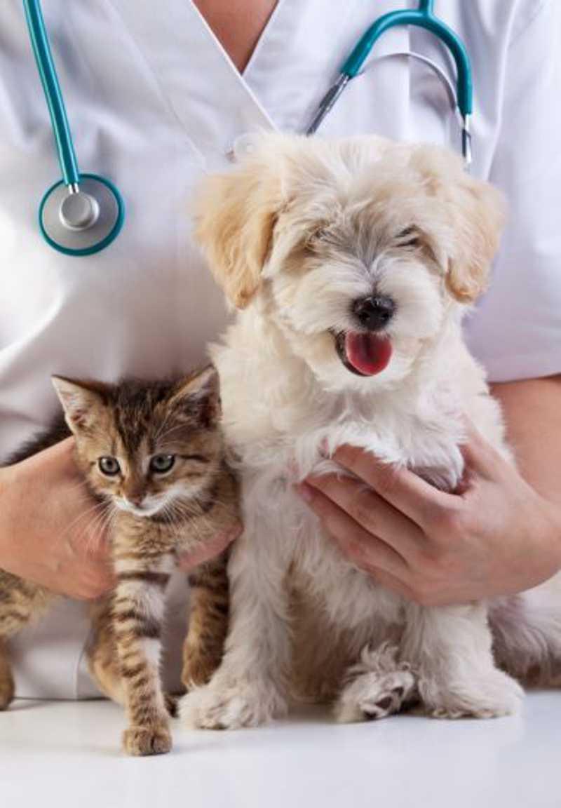 Guarapari (ES) inicia agendamento da castração de cães e gatos