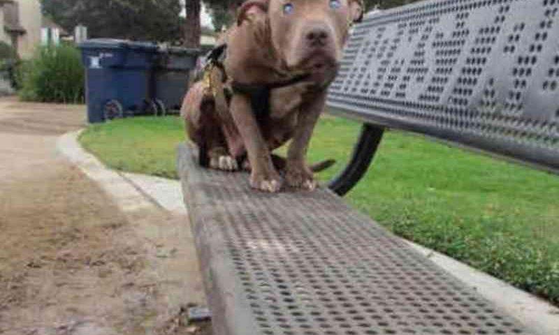 Cadela cega é abandonada num parque e fica completamente desorientada