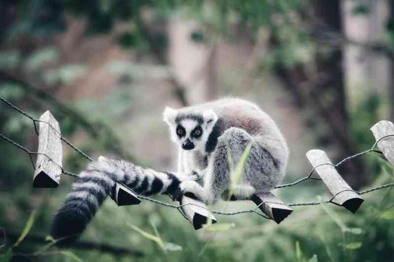 Animais encontrados em condições deploráveis: isolados, apertados e cercados de fezes e larvas no zoo 'perfeito'