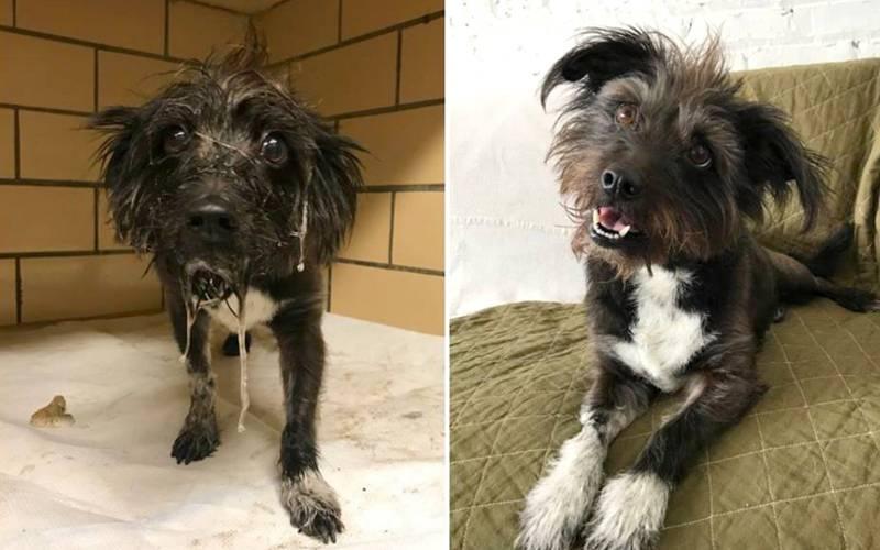 Cachorrinha que babava incontrolavelmente de medo no abrigo encontra um lar