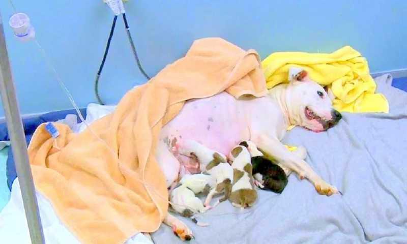 Homem joga cadela para fora do carro enquanto ela estava dando à luz