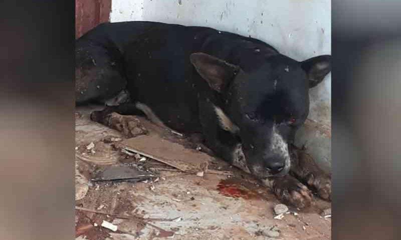 Cachorro é baleado e agredido com barra de ferro em Marzagão, GO