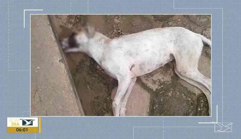 Envenenamento de cães revolta moradores no Maranhão