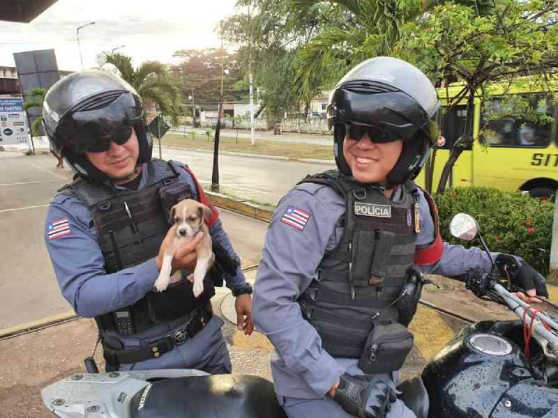 PM que atirou em cadela em São Luís (MA) diz que é defensor dos animais: 'Não tinha outra opção'