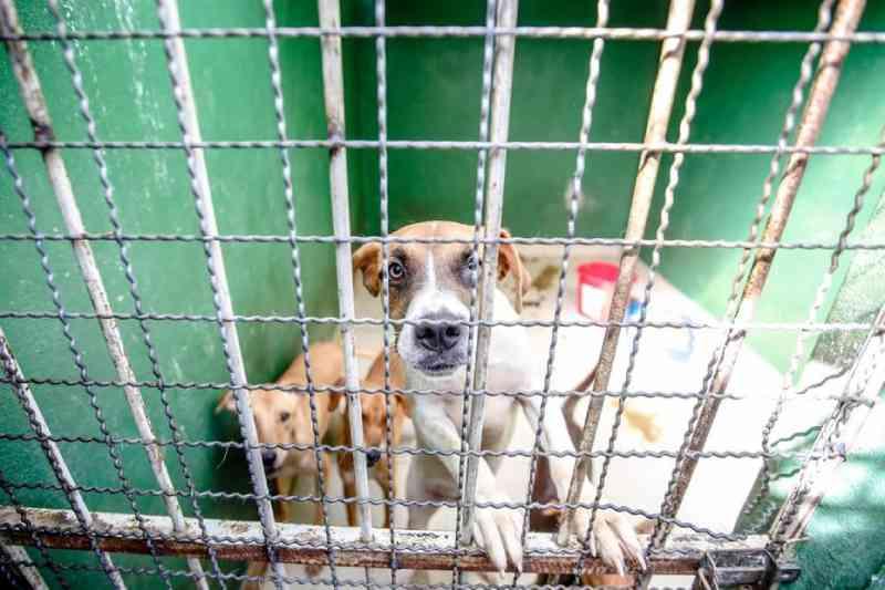 Chuva atinge ONG de proteção a animais e cães ficam submersos em Belo Horizonte