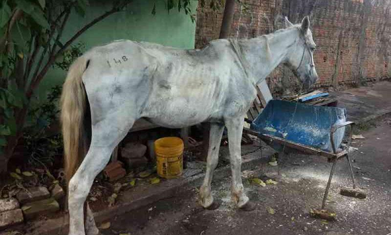 Égua com sinais de maus-tratos é resgatada em Uberaba, MG