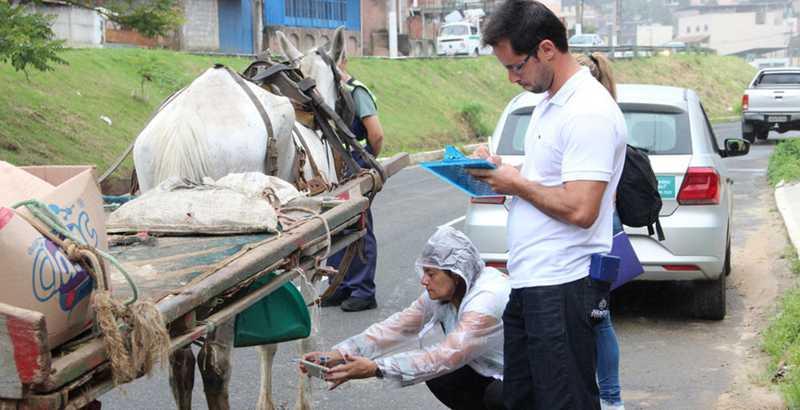 Ação de fiscalização do trânsito de carroças nas ruas de Juiz de Fora — Foto: Prefeitura/Divulgação