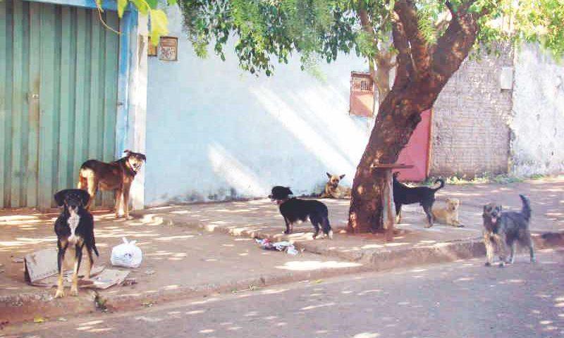 Município deveria esterilizar, no mínimo, 10% da população de cães e gatos por ano