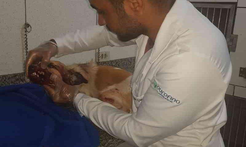 Polícia investiga morte de cachorrinha agredida a pauladas quando procurava comida no lixo em MS