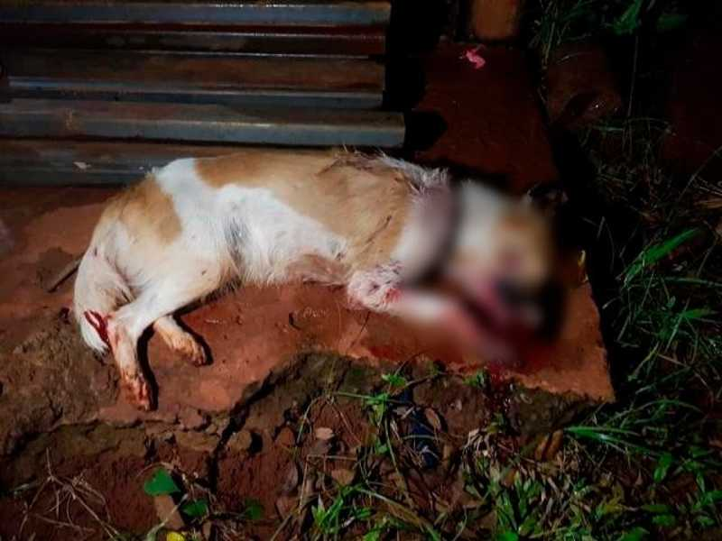 Cadela é morta a pauladas enquanto procurava comida em lixo de moradora