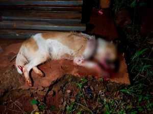 Cachorrinha Miska foi resgatada e deu destaque a maus tratos na última semana. (Foto: ONG Abrigo dos Bichos)