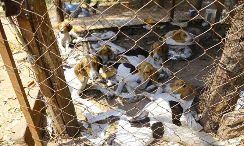 Cães foram resgatados em setembro. (Foto: Marcos Ermínio)