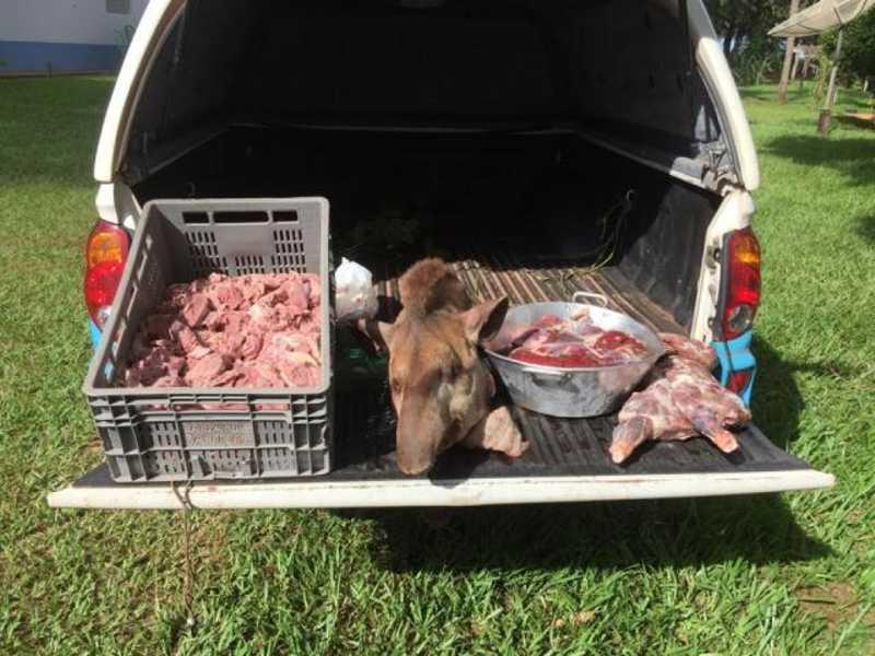 Carne e a cabeça da anta encontrados na propriedade. (Foto: Divulgação/PMA)