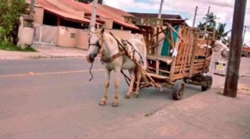 Veículos puxados por animais são proibidos de circular em Cuiabá, MT