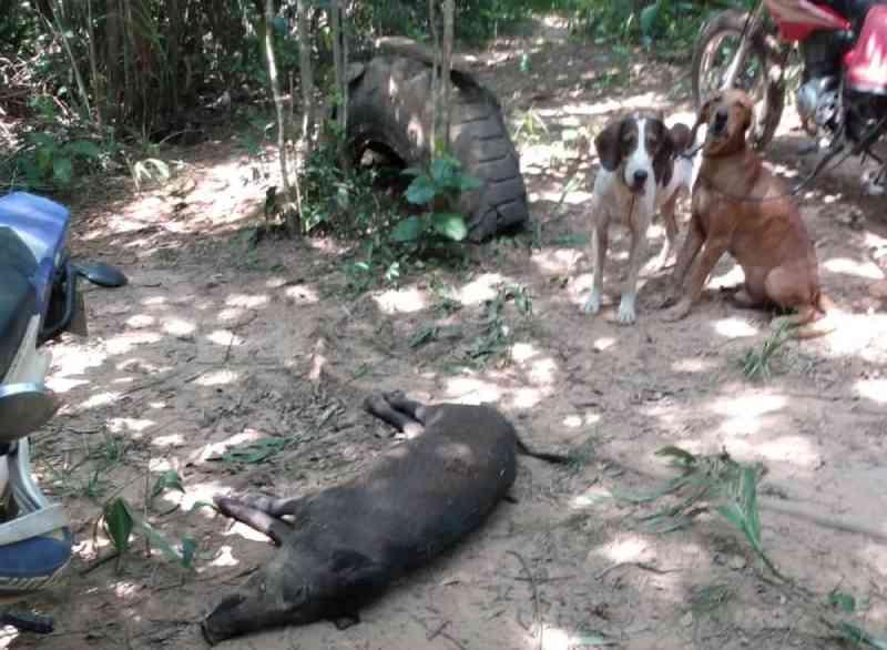 Cachorros usados por caçadores são resgatados e polícia suspeita de maus-tratos em MT