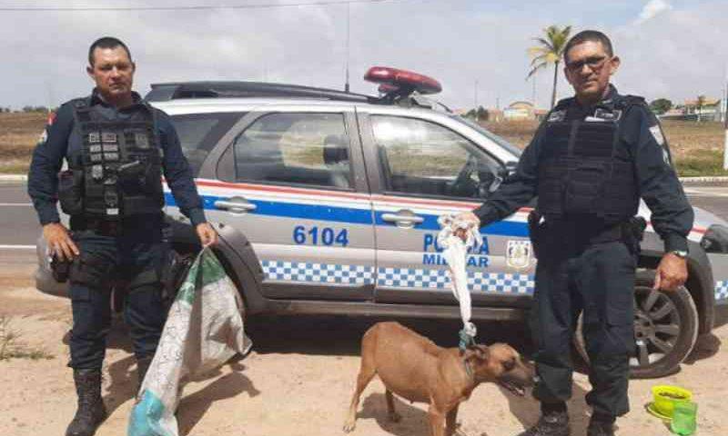 Cachorra grávida é encontrada amarrada dentro de saco em Salinópolis, PA