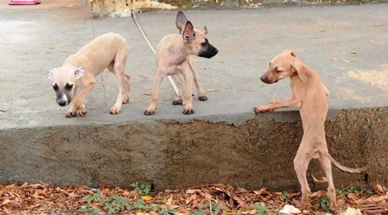 Câmeras flagram momento em que homem abandona 5 cachorrinhos na cidade de Patos, PB