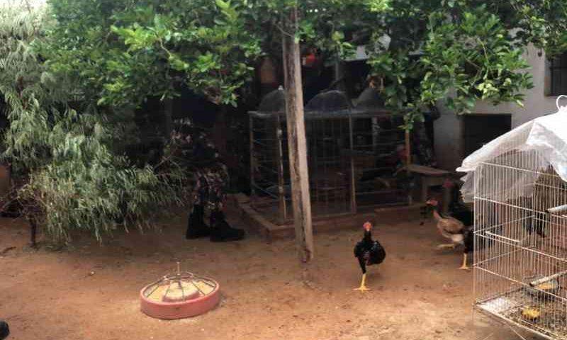Animais são resgatados por meio de atuação da OAB Piauí