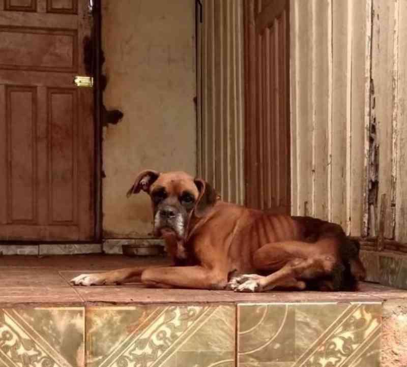 Maus-tratos resultam em morte de cão e causam revolta em Arapongas, PR