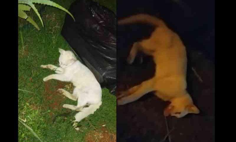 Gatinho morre após ser violentamente arremessado para a rua por namorado da tutora, em Cascavel, PR